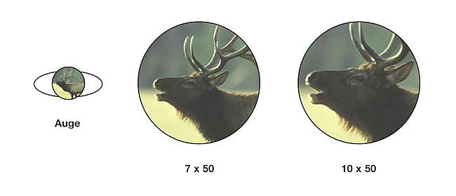 Beispiel für verschiedene Vergrößerungen